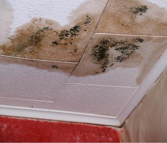 Mold Remediation Methods to Clean and Remove Mold
