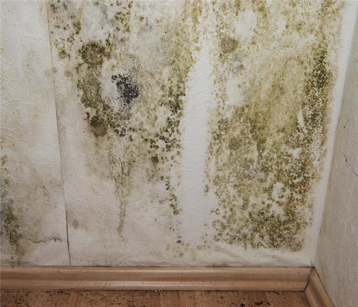 Why SERVPRO 4 Tips for Preventing Mold