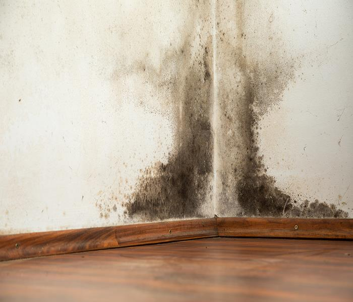 Mold Remediation When You Have Mold Damage in Your Home, It's Time to Call Professionals