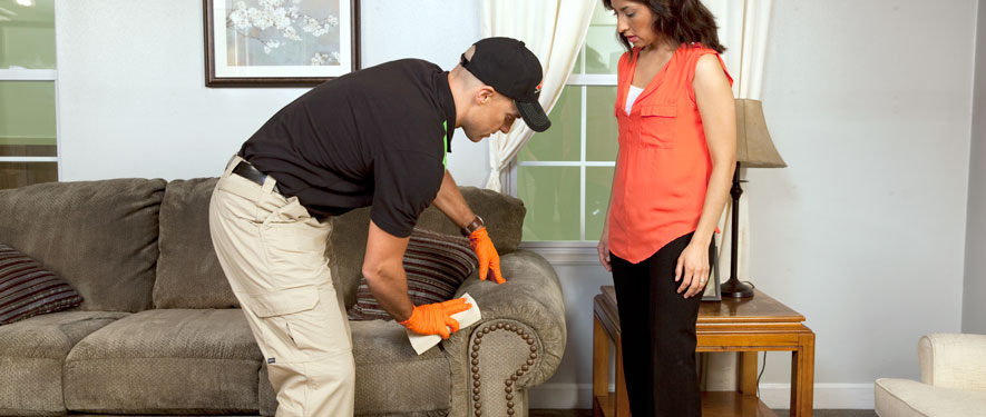 St Petersburg, FL carpet upholstery cleaning